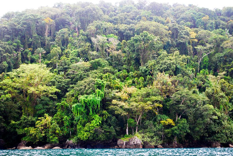 rainforest meets sea in Madagascar