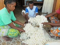 malagasy team members with undyed bombyx cocoons