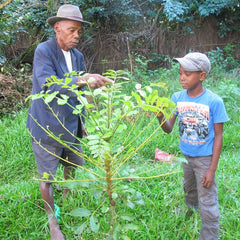 grandfather teaches grandson about native tree
