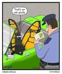 """cartoon of a butterfly driving a car pulled over by a police officer who is checking the butterfly's license, license has a picture of a caterpillar, butterfly has a speech bubble that says """"that's an old photo"""""""