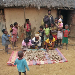 sorting cocoons in the ceranchia community