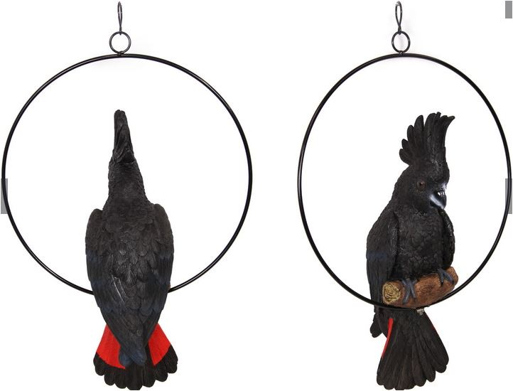 Black Cockatoo in Ring