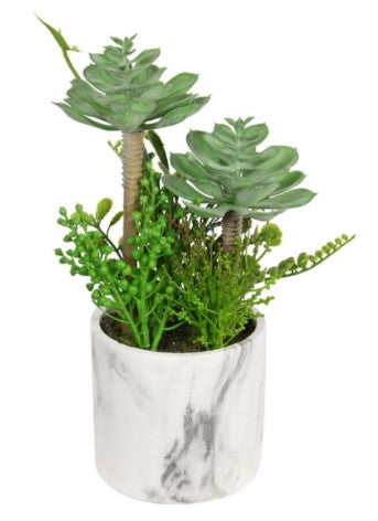 Succulents in Marble Pot
