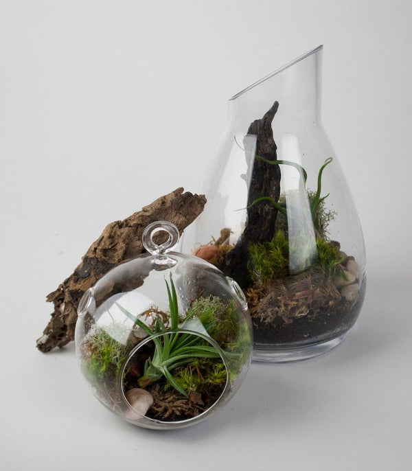 Terrarium Reviews
