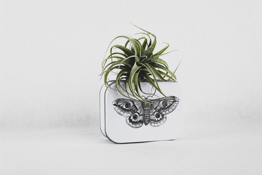 Butterfly Match Tins-SproutSouth-
