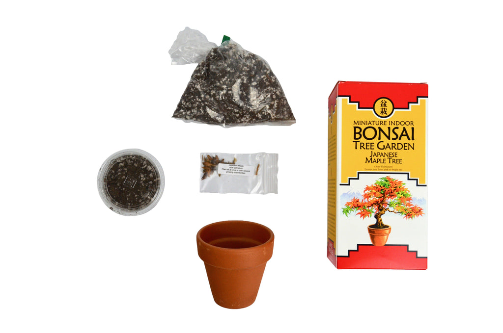 DIY Bonsai Tree Garden Grow Kit - Japanese Maple Tree Seeds-SproutSouth-DIY Kits