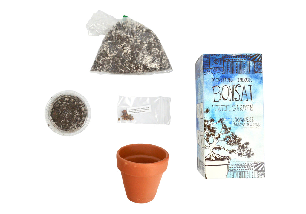 DIY Mini Indoor Bonsai Tree Garden Grow Kit - Japanese Black Pine Tree-SproutSouth-DIY Kits