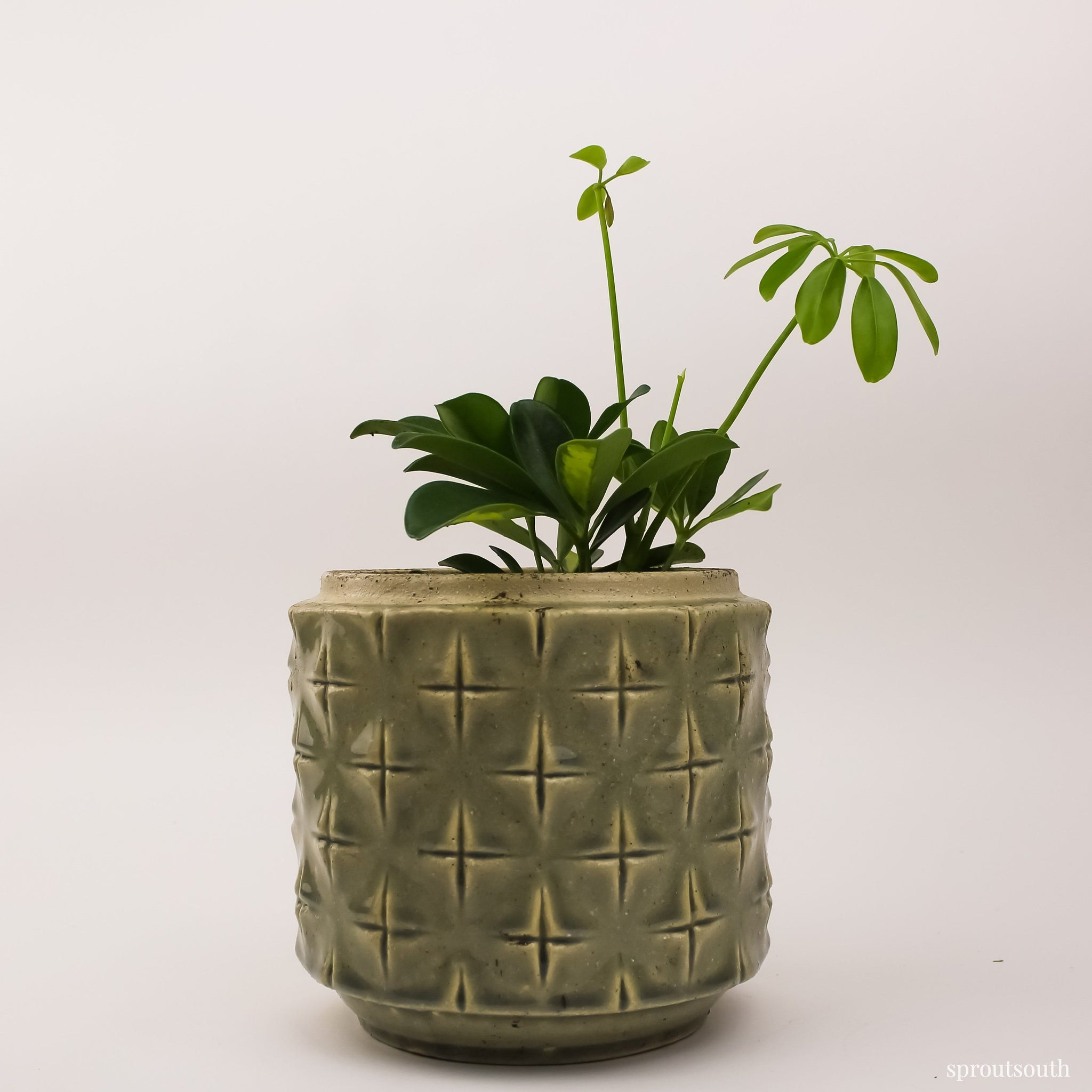 Geometric Large Green Planter Planter SproutSouth