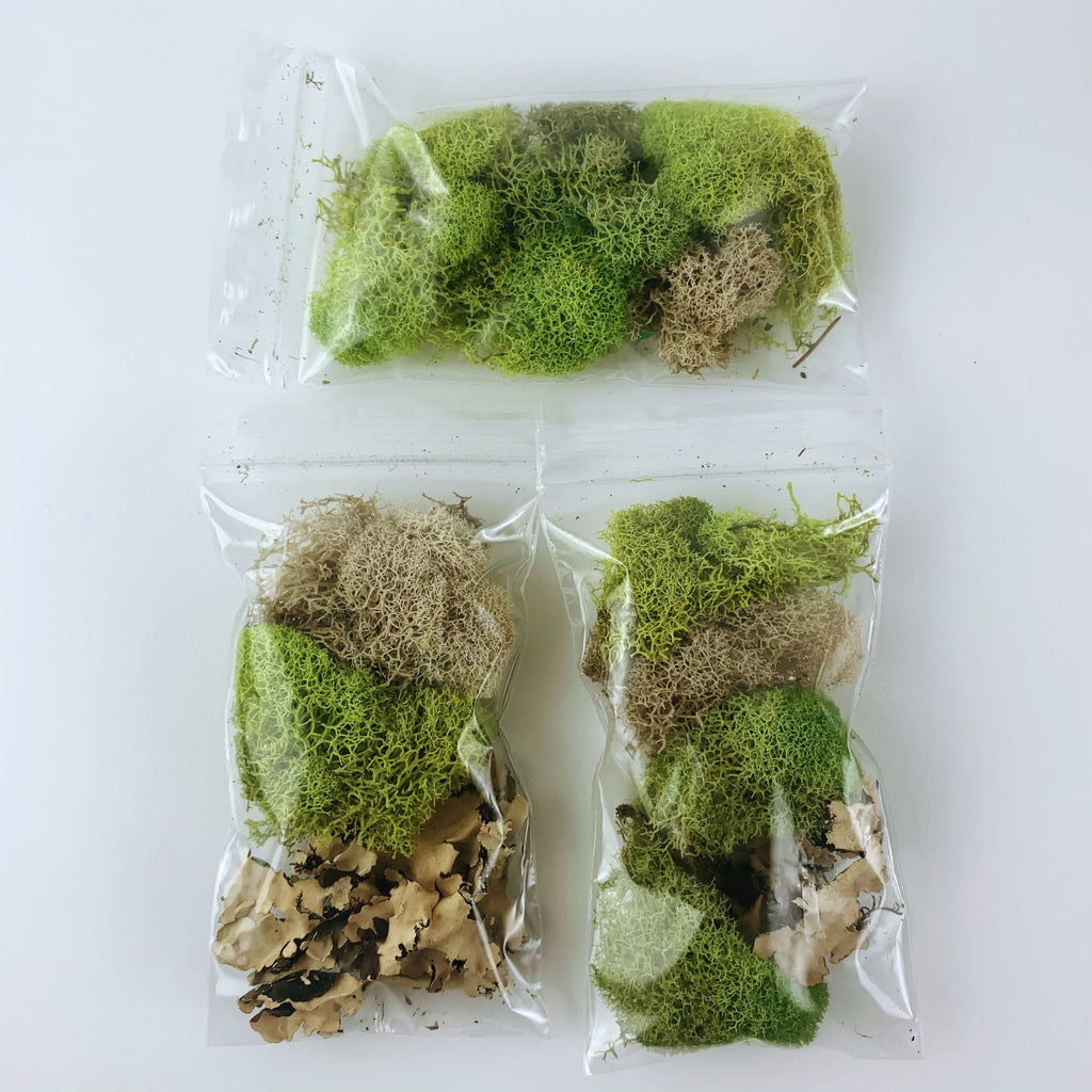 Moss & Lichen Small Pack-SproutSouth-Terrarium Kit