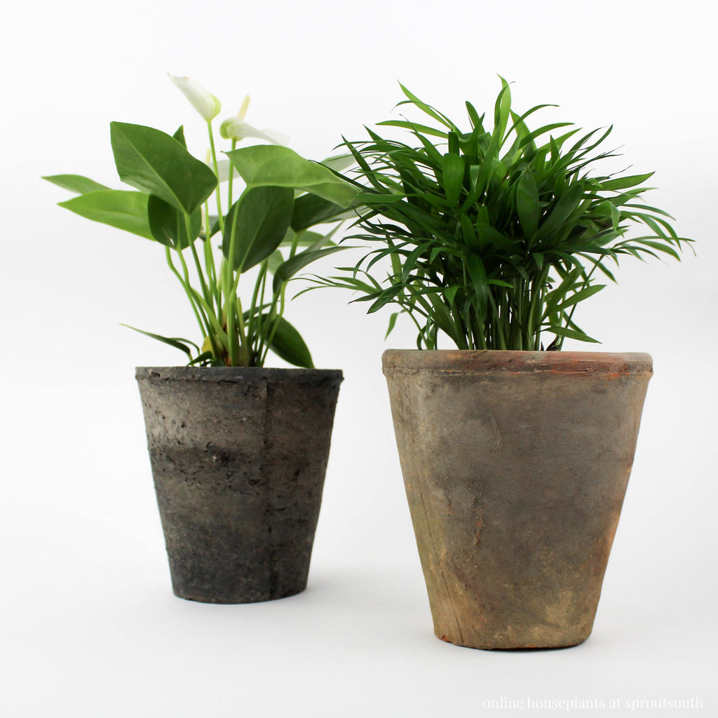 Rust & Grey Terracotta Planters Planter HomArt