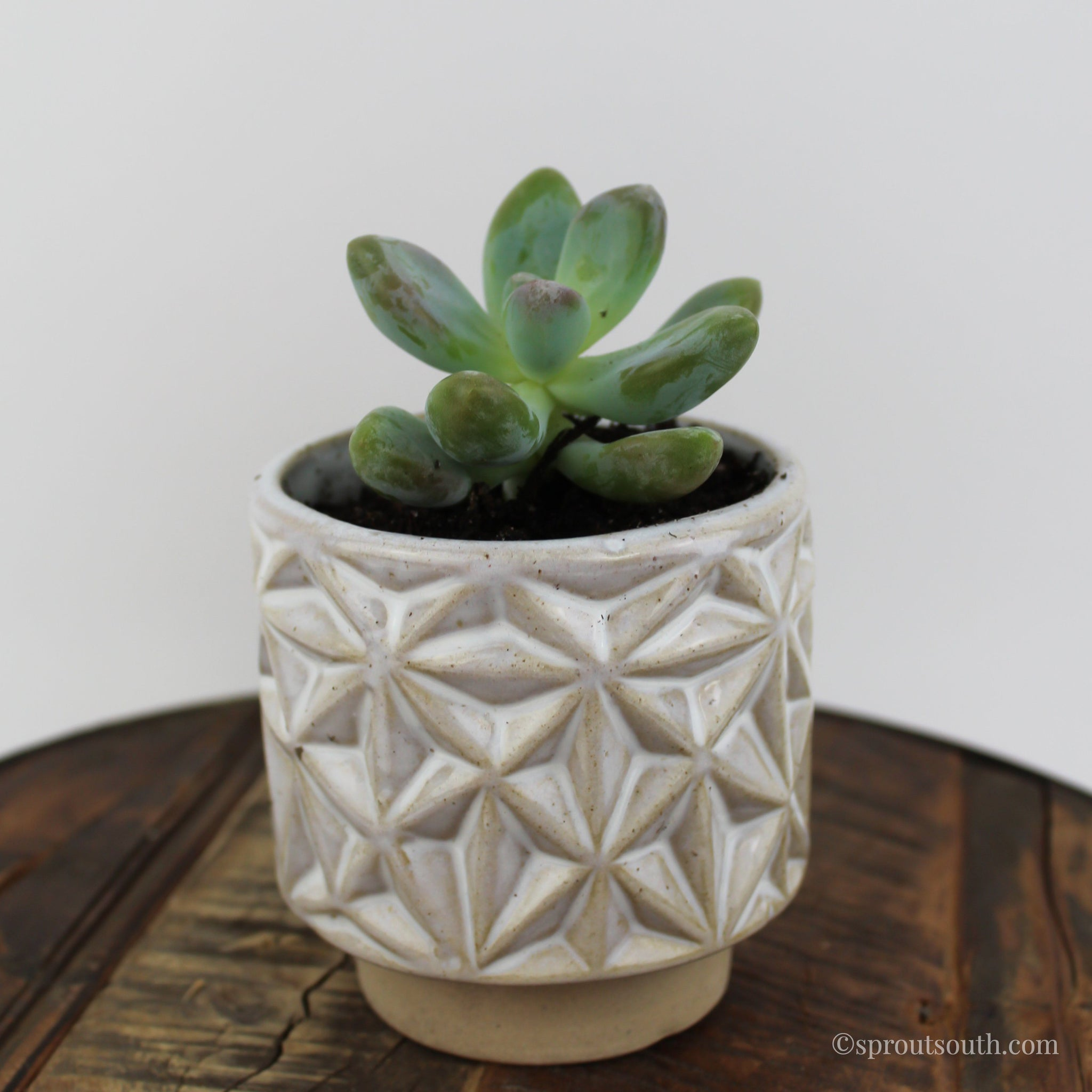 Succulent & Ceramic Pot Duo-SproutSouth-Plant