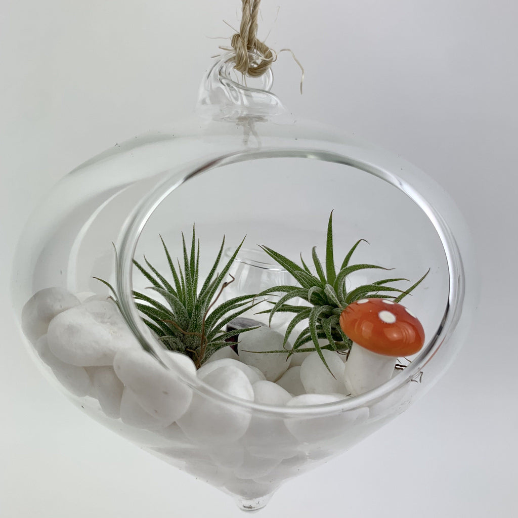 Terrarium Kit - Hanging Ornament Terrarium-SproutSouth-Terrarium Kit