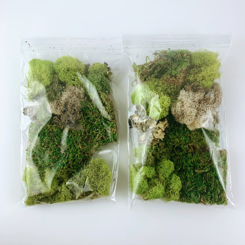 Terrarium Moss Kit Medium Assortment-SproutSouth-Terrarium Kit