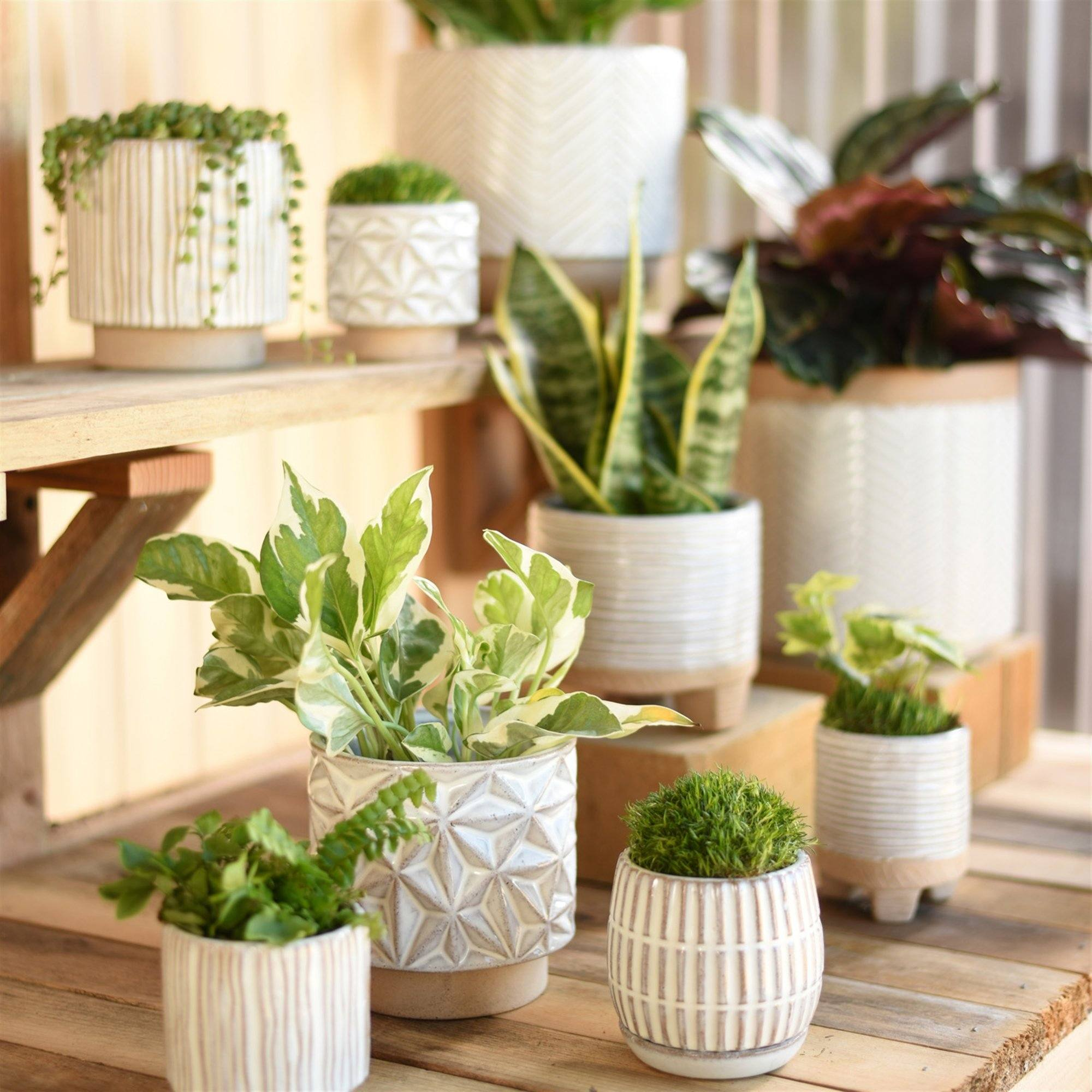 Tiny Geometric Planter-SproutSouth-Planter