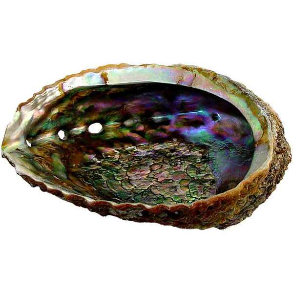 Large Abalone Shell for Smudging Sacred Space and Burning Incense