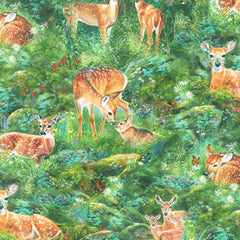 Fawns in Forest