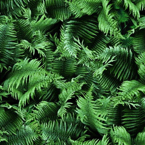 Forest Floor in Fern (digital spectrum print)