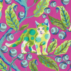 Disco Kitty in Berry Bird