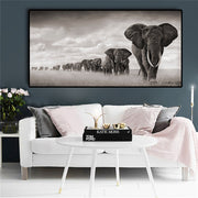 Black Africa Elephants