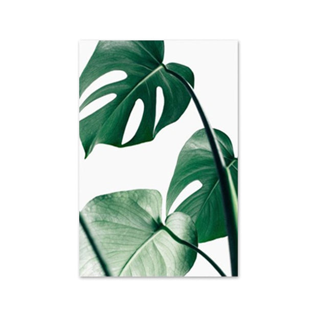 Monstera Leaf Banana Palm Canvas Prints