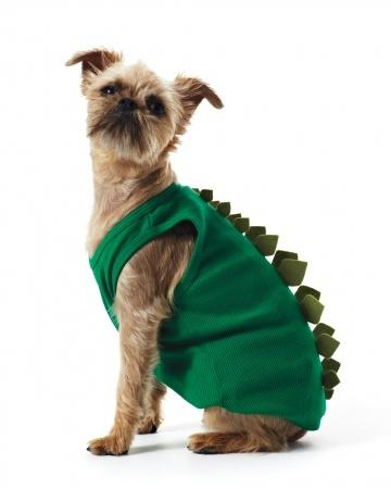 Martha Stewart Dinosaur Dog Costume