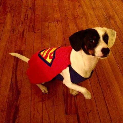Super Pup Dog Costume