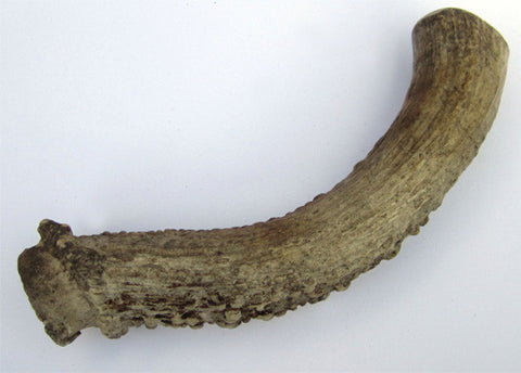 Medium Deer Antler