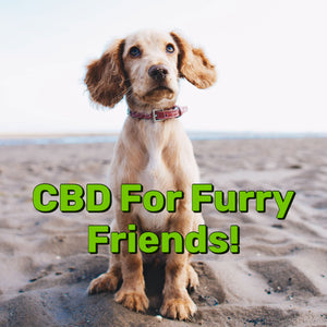 Is Hemp Good For Dogs?