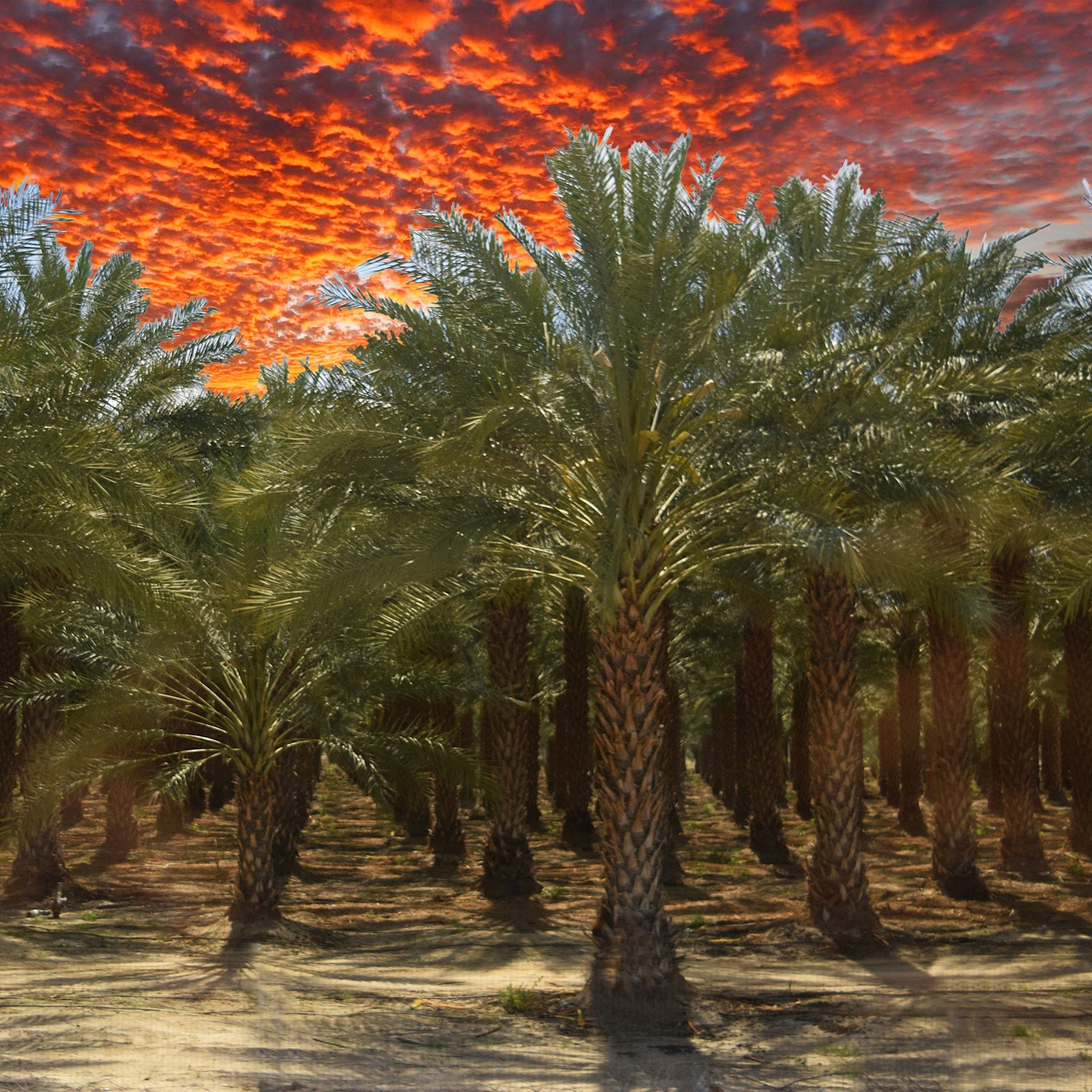 """Palm Tree Garden-Salton Sea"" by Sherry Little Fawn Schuessler 