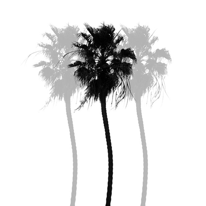 """Tropical Darkroom #266"" by Derek Delacroix 