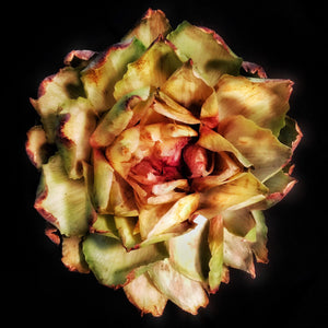 """Artichoke Mandala"" by Adrienne Anbinder 