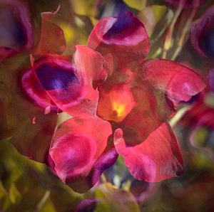"""Mandevilla Garden Party"" by Petra Bernstein 