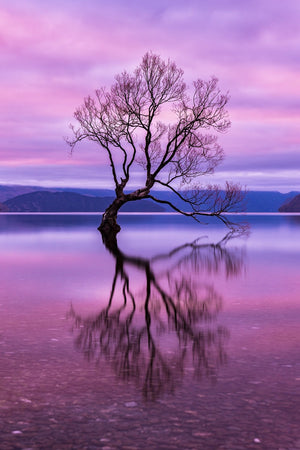 """The Wanaka Tree"" by Armand Nour 