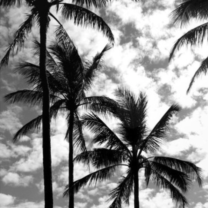 """Tropical Darkroom #235""  by Derek Delacroix 