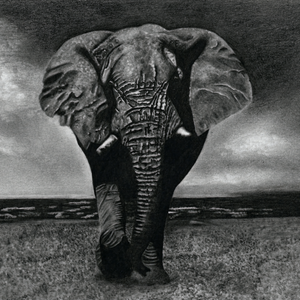 """Elephantus"" by Glaucia Maysonnave 