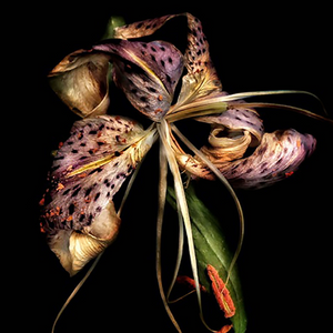 """Soul Lily"" by Adrienne Anbinder 