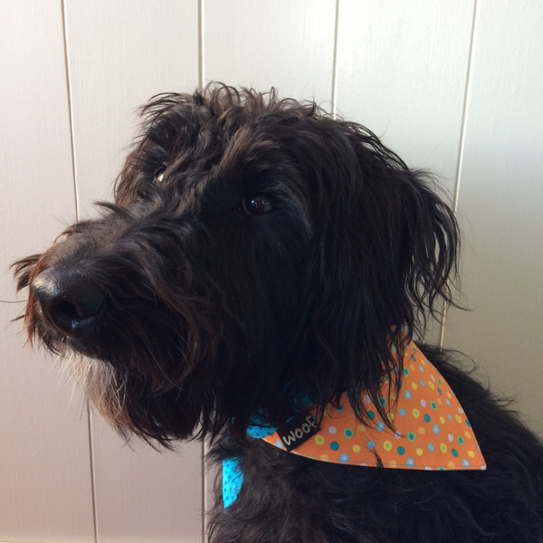 Dog Bandana - Tie on style