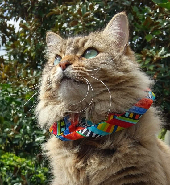 Cat Collar Cover - Cat Size - Multicoloured stripes