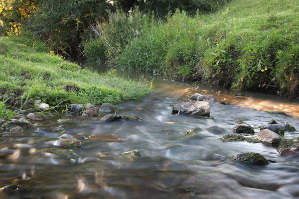 Guided Family Stream Tour Walks