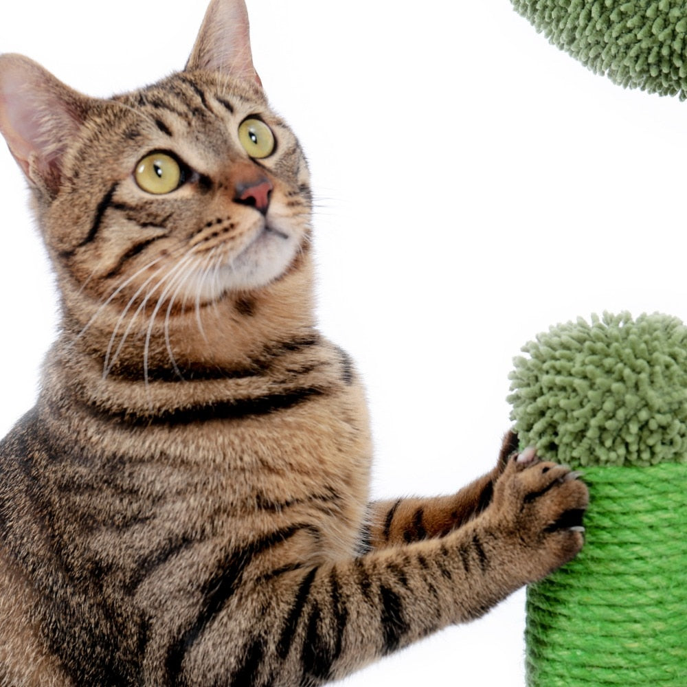 2 Size Cactus Style Cat Tree House Climbing Scratching Posts for Cat