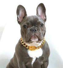 Load image into Gallery viewer, Gold Plated Dog Chain Collar By Doggy Bunch