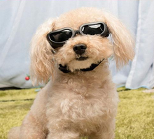 Load image into Gallery viewer, Small Dog Goggles By Doggy Bunch