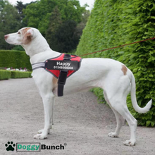 Load image into Gallery viewer, No PULL Easy On Easy OFF Personalized Dog Harness