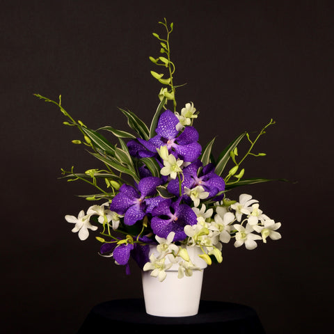 Designed By... Arrangement 'Orchid Delight'