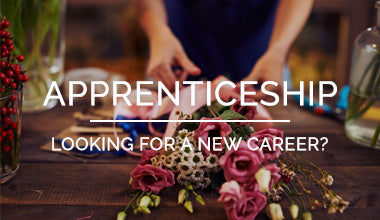 Apprenticeships at Carl Banks