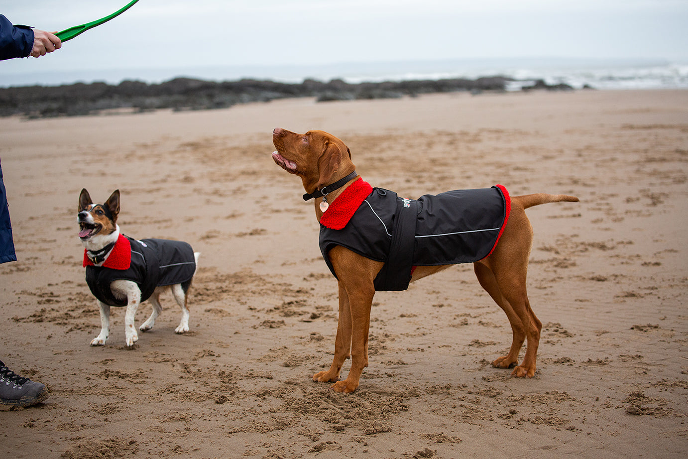 Dogs wearing dryrobe dog robe