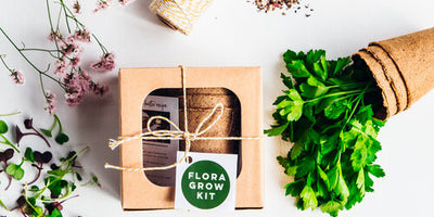 The Kitchen Herb Kit