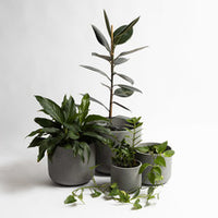 The Rustie Cement Pot {The Black}