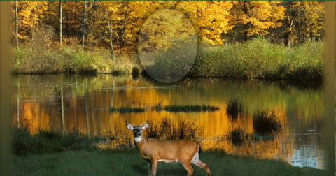31 Deer with Lake Memorial Candle with Photo