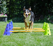 Load image into Gallery viewer, CanineGym® Gear Agility Kit
